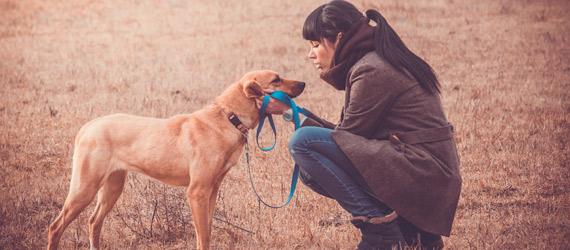 Se admiten perros - Novo Sancti Petri